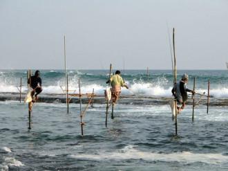 Câu cá trên cọc của ngư dân Sri Lanka