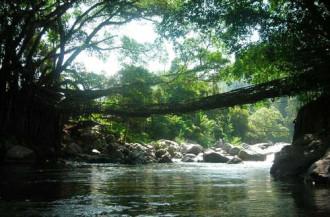 Cây cầu 'sống' ở sông thiêng Indonesia