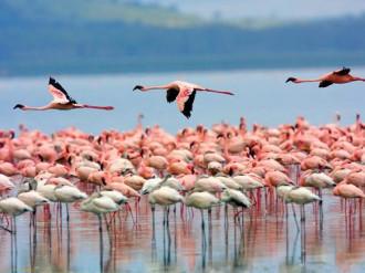Mùa chim hồng hạc di cư ở Kenya