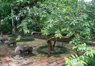 Những câu chuyện 'huyền bí' ở xứ Thanh
