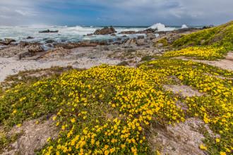 Xứ sở hoa thần kỳ trên hoang mạc Nam Phi