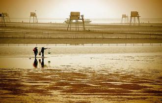 Móng tay và ngao tươi sống trên biển Đồng Châu