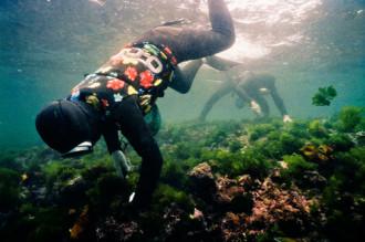 Những 'nàng tiên cá' ở đảo Jeju