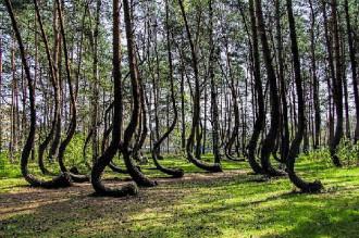 Khu rừng bí ẩn ở Ba Lan