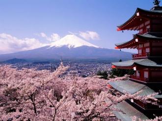 Lễ hội ngắm hoa anh đào tại Nhật Bản