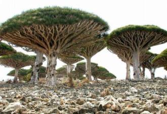 Miền đất 'ngoài hành tinh' trên đảo Socotra
