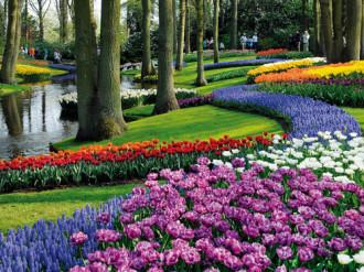 Keukenhof thiên đường của muôn loài hoa