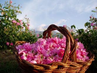 Những thiên đường hương thơm nổi tiếng thế giới