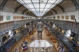 Cuộc diễu hành của những bộ xương tại bảo tàng Pháp