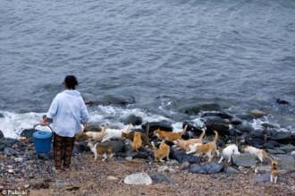 Hòn đảo có mèo nhiều hơn người ở Nhật Bản