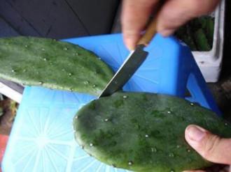 Món xương rồng lạ miệng ở Quảng Nam