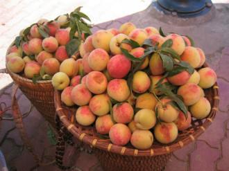Những loại quả thơm ngon nên mua khi du lịch