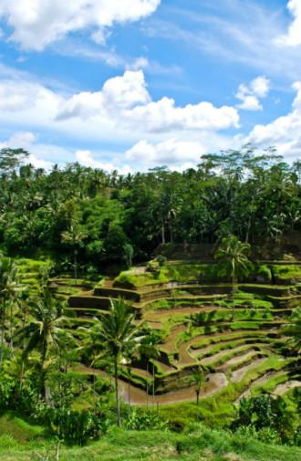 Vẻ yên bình của ngôi làng Bali