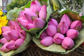 10 mùa săn hoa hấp dẫn nhất Việt Nam