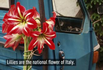 20 điều thú vị về Italy