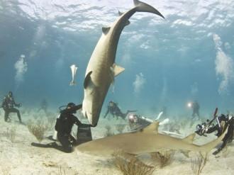 Những điểm đến lý tưởng để 'vui đùa' cùng cá mập