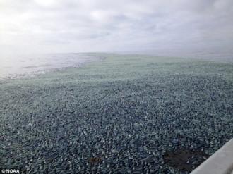 Sinh vật bí ẩn tấn công bờ biển Mỹ