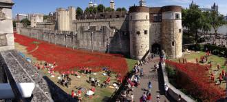 Suối hoa poppies 'khổng lồ' ở Anh