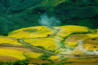 Thảm lúa vàng ở Y Tý ngày đầu thu