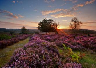 Những 'khung hình' đẹp nao lòng của mùa thu nước Anh