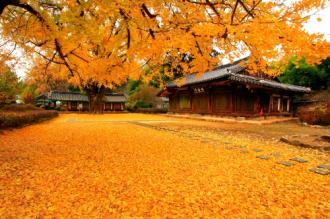 Tour Hàn Quốc giá 13,8 triệu đồng