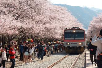 Hàn Quốc đền tiền cho du khách bị 'chặt chém'