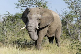 Nữ du khách bị voi dẫm chết trong công viên Ấn Độ