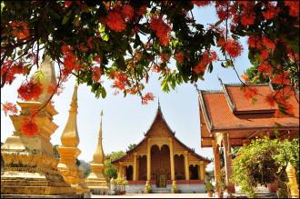 Luang Prabang, mùa hoa Ashoka nở