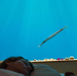 Phòng ngủ 5 sao chìm dưới đại dương