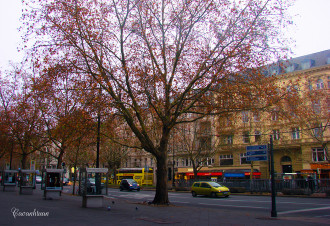 Vẻ đẹp Berlin những ngày đầu đông