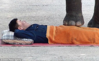 Du khách phấn khích nằm dài để voi đạp lên người