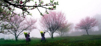Ngỡ ngàng 'giấc mộng hoa' phương Bắc