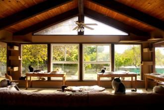 Thiên đường của những chú mèo vô gia cư