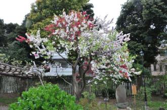 7 lễ hội hoa mận tại Nhật Bản