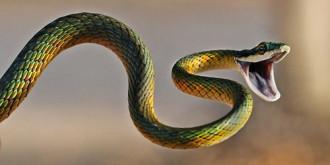 8 điều thú vị về rắn