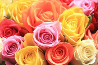 Hành trình của hoa hồng Ecuador cho ngày Valentine