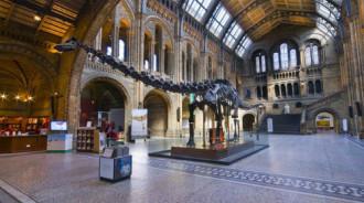 Xương khủng long 'thất thế' tại bảo tàng Anh