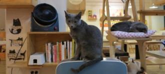 6 quán cà phê động vật độc đáo ở Tokyo