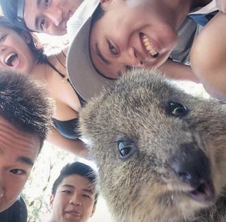 Loài chuột hạnh phúc nhất thế giới nổi như cồn ở Australia