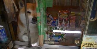 Chú chó biết bán hàng ở Tokyo