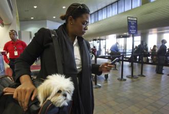 Dịch vụ giám sát thú cưng trên máy bay