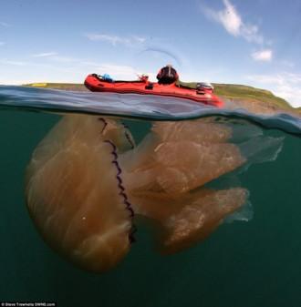"""Bí ẩn hàng ngàn con sứa khổng lồ """"tấn công"""" bờ biển nước Anh"""