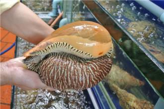 Gỏi ốc giác - món ăn khó bỏ lỡ ở Phan Thiết
