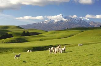 New Zealand, thiên đường ẩm thực xanh của thế giới