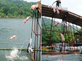 Trung Quốc tổ chức thi bơi lợn