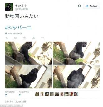 """Chú khỉ """"đẹp trai"""" thu hút du khách nữ đến thăm sở thú Nhật"""