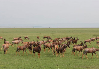 10 định kiến sai lầm về du lịch Kenya