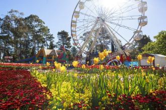 Đến Australia dự lễ hội hoa