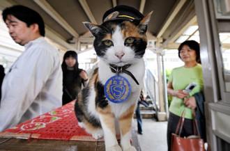 Nhật Bản bổ nhiệm mèo làm trưởng ga tàu
