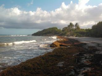 Thiên đường du lịch Caribbean bốc mùi hôi thối